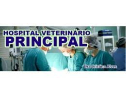 HOSPITAL-VETERINARIO-PRINCIPAL
