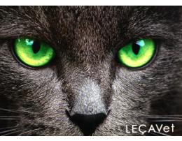 clinica-veterinaria-lecavet